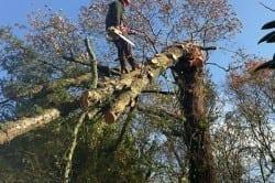 tree service ri