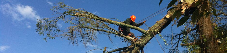 ri tree services