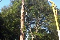 rhode island tree service