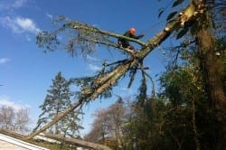 tree removal ri